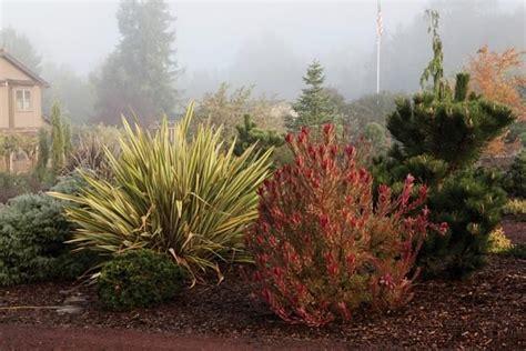 california winter garden ideas photograph garden in petalu
