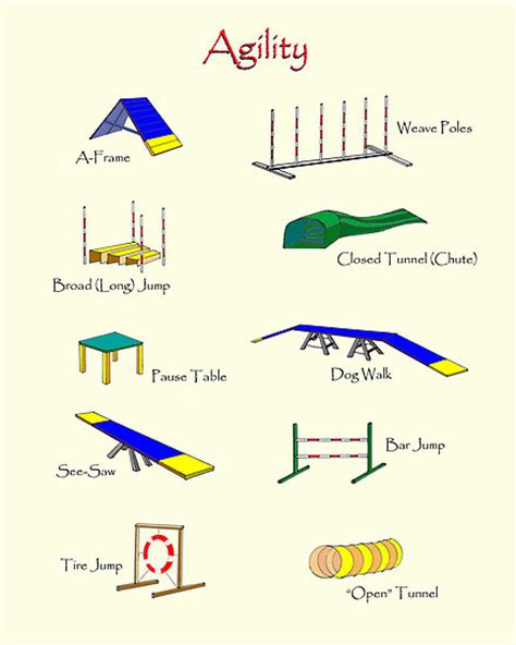 agility equipment for dogs images of small tdaa agility equipment for teacup and dogs breeds picture