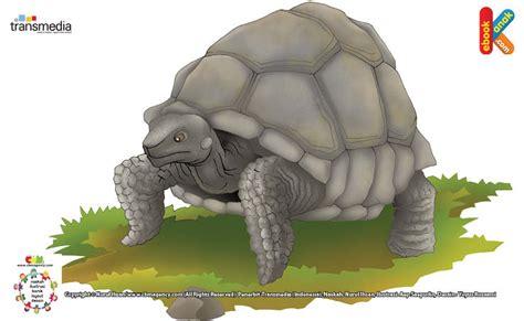 Buku Seri Mengenal Hewan Kura Kura kura kura galapagos kura kura terbesar dunia ebook anak