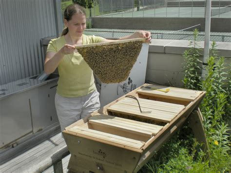 how to have a beehive in your backyard beautiful beekeeping with a beepod beehive homestead style