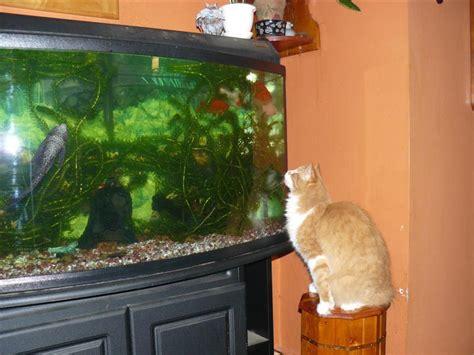 turn  aquarium   terrarium gardenorg