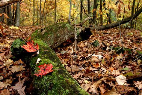 Forest Floor by Forest Floor By Gemini Photo Weather Underground