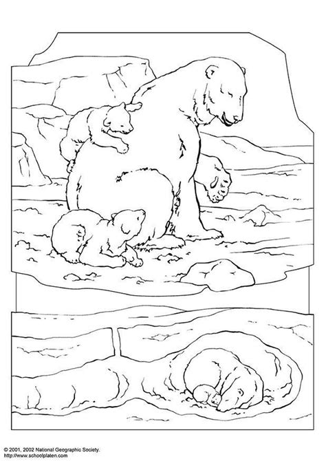 coloring pages alaska animals malvorlage eisb 228 r ausmalbild 3063