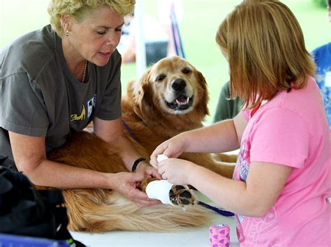 pet care lp county small animal shelter hosts animal care c what s new laporte