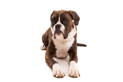 best dogs to own list of the best dogs to own for time pup parents