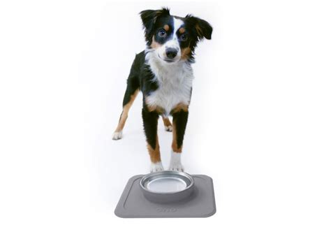 become a wholesaler ono pet products become a wholesaler