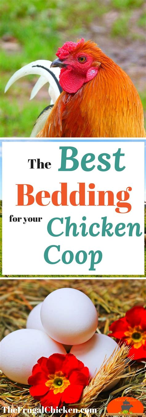 best bedding for chickens 17 best ideas about backyard chicken coops on pinterest