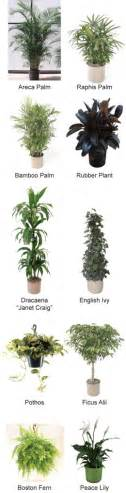 top house plants top 10 house plants that clean the air care2 healthy living