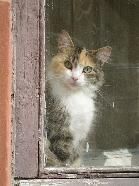 lisey s story a panic station 17 best images about calico cats on cute cats pets and cute kitty