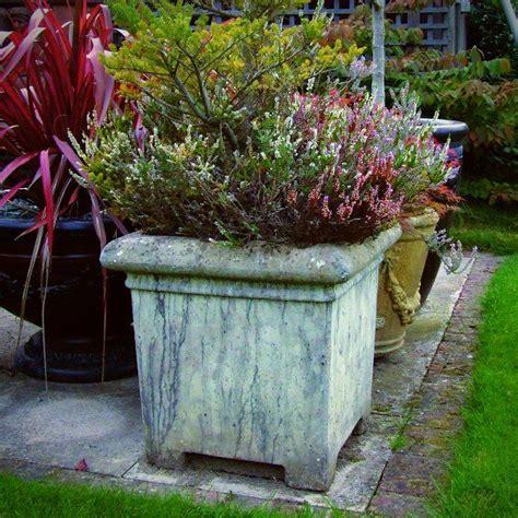 images  extra large pots  pinterest plant
