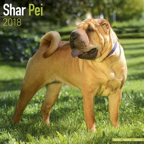 shar pei price shar pei calendar 2018 10070 18 shar pei breeds