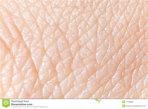 royalty free human skin macro pictures images and stock photos istock human skin royalty free stock images image 17108889