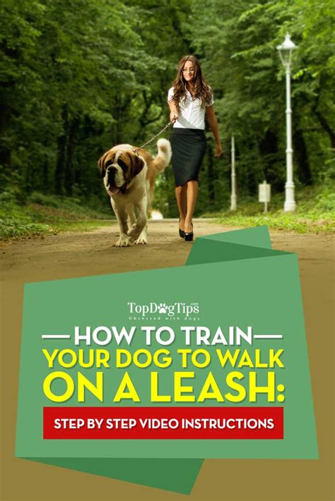 how to dogs to walk on a leash how to a to walk on a leash a guide top tips