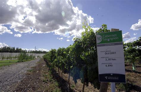 rio negro noticias desde la patagonia las 24 horas ruta del vino en r 237 o negro all argentina