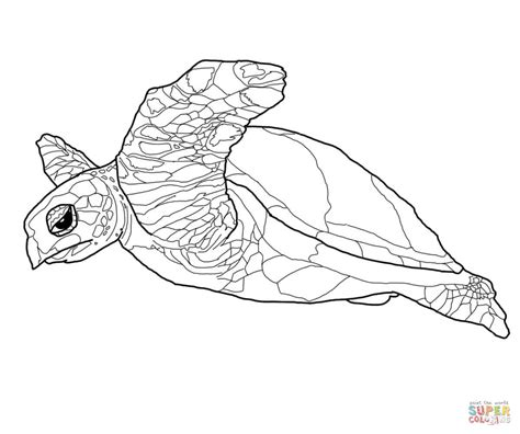 land turtle coloring page hawksbill sea turtle coloring page free printable
