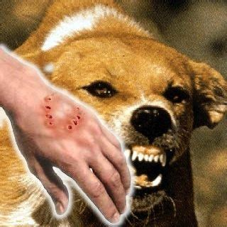 puppy rabies can a stray puppy s scratch cause rabies if the skin is slightly broken quora