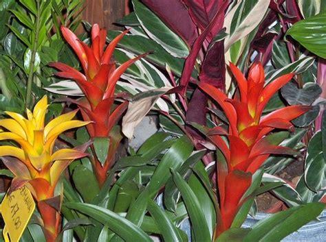 fiori di appartamento piante ornamentali d appartamento idee green