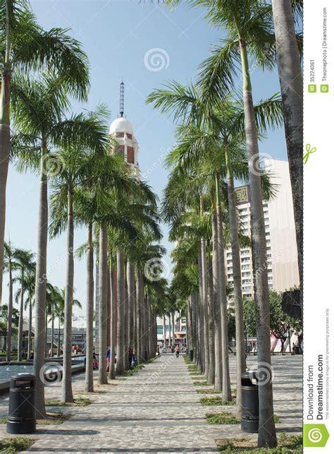 palm tree  victoria harbor editorial photo image