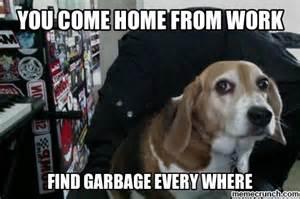 Beagle Meme - beagle meme memes