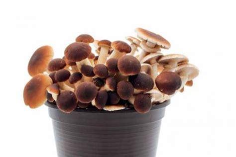 Pilze Im Garten Anbauen by Speise Pilze Selber Anbauen Mein Sch 246 Ner Garten