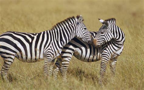 dunia binatang kehidupan aneka ragam marga satwa binatang hewan fauna di planet ini