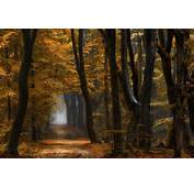 Nature Landscape Forest Path Mist Fall Yellow