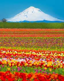 usa honeymoon mt hood oregon so beautiful usa