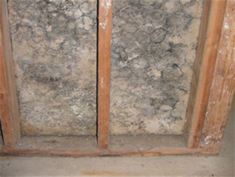 basement mold prevention mold prevention learn how to prevent mold create a healthier home