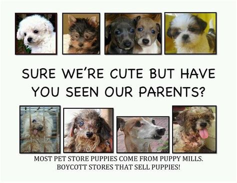 what is a backyard breeder puppy mills and backyard breeders vs responsible breeders