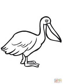 pelicans colors pelican seabird coloring page free printable coloring pages