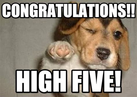 Congratulations Meme - cute congratulations meme guy pictures to pin on pinterest