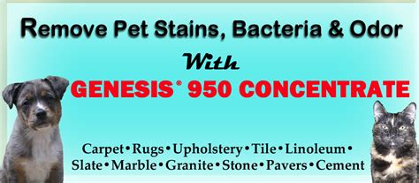 remove pet odor from couch genesis 950 cleaning tips and tricks remove pet stains