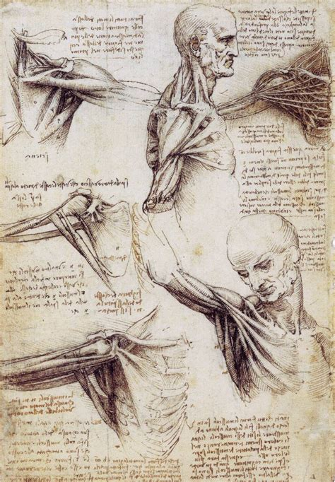 Sketches Leonardo Da Vinci the drawings of leonardo da vinci