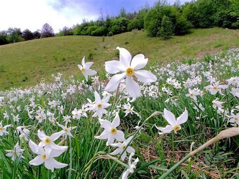 linguaggio dei fiori perdono forum le perle cuore il linguaggio dei fiori