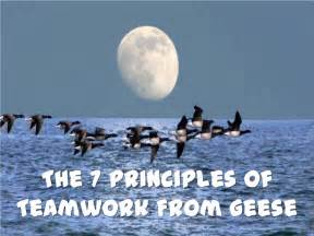 Story of geese and teamwork teamwork quotes amp sayings images page 20