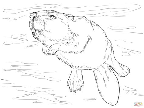 dibujo de castor nadando  colorear dibujos