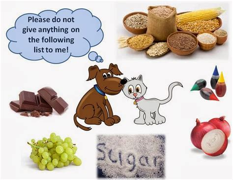 are olives bad for dogs 10 foods you shouldn t give to your