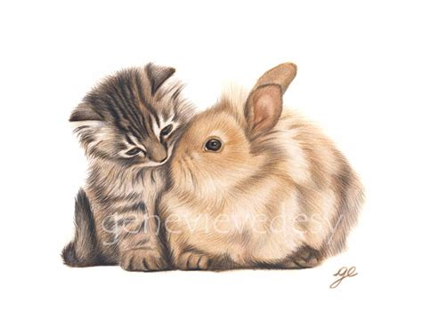 Pp Bunny original drawing of a bunny and cat bunny and kitten drawing