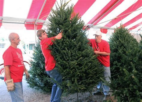 christmas tree lots provide welcome seasonal employment