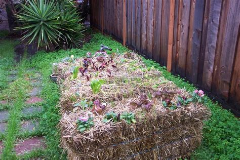 Hay Bale Garden by 10 Reasons To Try Straw Bale Gardening How To Get Started