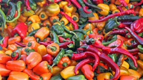 types of garden peppers varieties of peppers and pepper information the