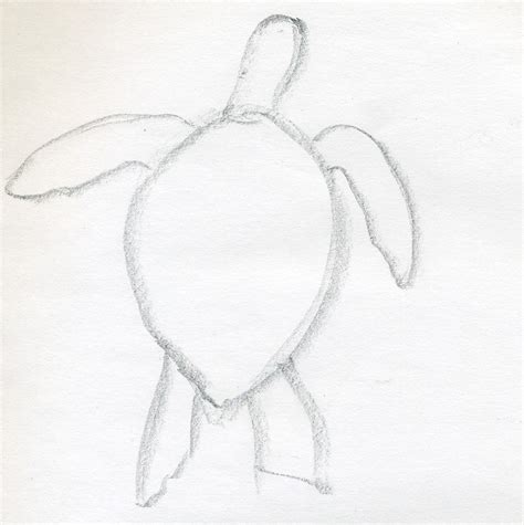 Drawings Easy by How To Draw A Turtle