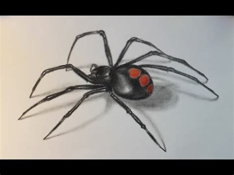 drawing amp demo juvenile black widow spider f h b