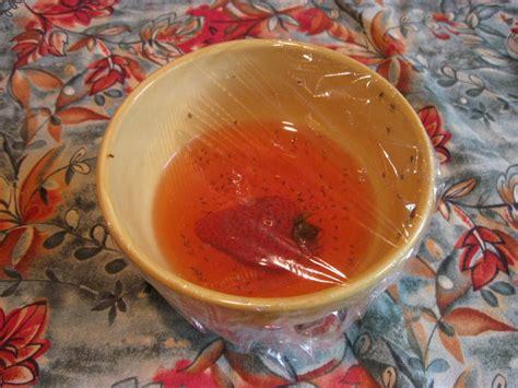 fruit fly trap easy fruit fly trap five gallon ideas