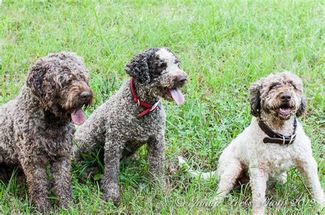 truffle dogs blackberry farm walland tennessee bunkycooks