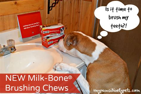 Happi Dental Chew Milk is it time to brush my teeth milkbone brushing chews