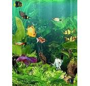 Animated Fish Tank Gif
