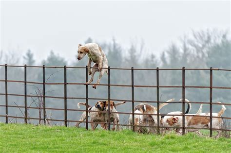 how to keep dog from jumping fence give your boss this story innovation starts with the