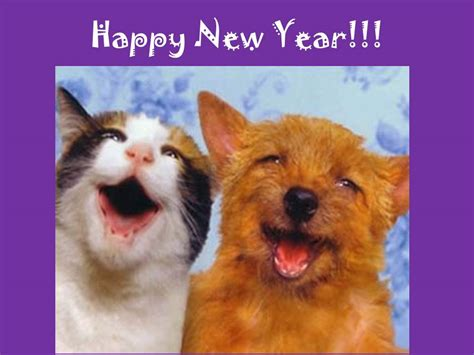 happy new year 2014 171 animalcare