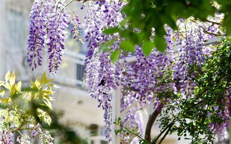 einfache pflanzen für den garten mediterrane pflanzen f 252 r den garten die sch 246 nsten exoten